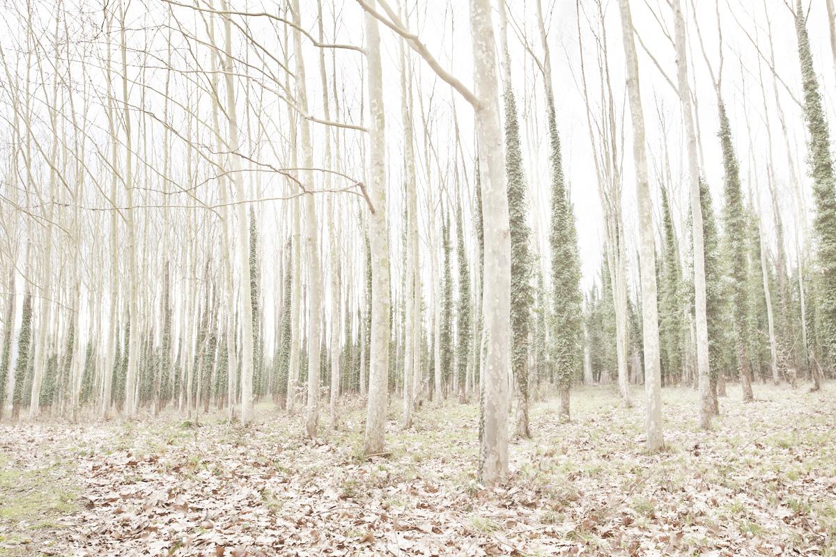 Alessandro Vincenzi Photographer-Candido-001